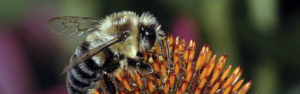 The Buzz on Bees: A Q&A session with YorkUs top bees experts on World Bee Day @ Online